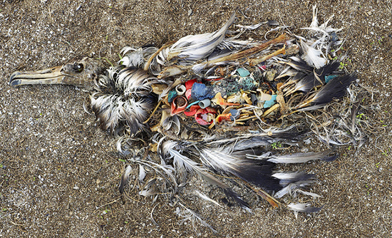 pacific-garbage-patch.jpg